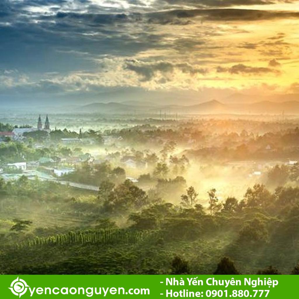 Bảo Lộc, Lâm Đồng là nơi ở lý tưởng cho chim yến sinh sống